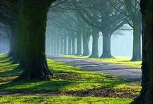 Natur und Landschaften
