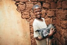 Gift Catalog: Animals / From community water wells, to cow pies the Gift Catalog is a way to give gifts with purpose this holiday season.  Each item is hand picked to fulfill a need for our global FH villages.  When you buy one of these gifts, you #GiveHope! #FHGifts / by Food For The Hungry