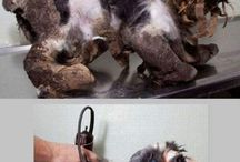 I hate animal cruelty,,,, / They don't deserve cruety,,,,,,