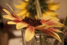 Flowers / by Carolyn V