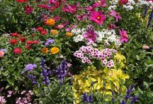 Perennials Flowers / Perennials Flowers. Perennial flowers available in seeds and plants from the most trusted name in home gardening. Sun, Shade and Border Perennials.