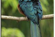 Kadalan bird
