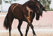 #Bay&Brown horses