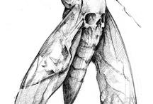 Motýľ-mora