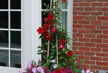 Container gardens 2