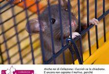 STOP alla VIVISEZIONE e alle violenze sugli animali / L'impegno di Collezione i Cuccioli contro la sperimentazione scientifica sugli animali, insieme alle principali realtà attiviste d'Italia.