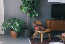 Haus_Pflanzen