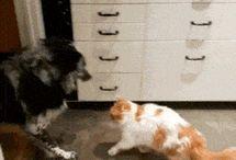 kutya macska