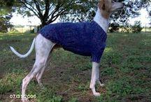 doggie jackets