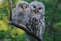 Oiseaux de proie