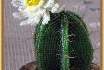 Fiori/Cactus