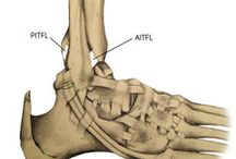 Foot & Ankle: Studies