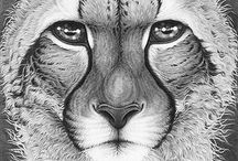 Wildlife Art / Some of my favourite wildlife art