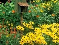 Bird Houses / by Liz Smith