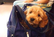 Portable Poochery / Dog in Bag or Bag on Dog; You decide!