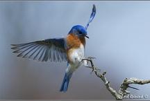 BIRDS / I love birds, big or small, I love em all!