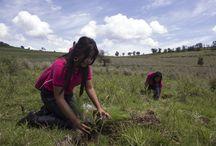 """Dona un árbol con ADO 2013 / Aquí algunas de las imágenes de la segunda reforestación ADO """"Únete al Rescate Monstruoso"""" en donde se sembraron 12,000 árboles en Santa Rita Tlahuapan, Puebla."""