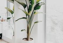Plants for house