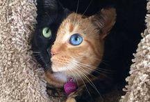 Mascotas Adorables / Una muy buena de Mascotas Adobrables que hemos encontrado en el Internet y queremos compartir con usted, Mientro de Veterinaria Chamy