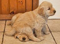 puppiesss