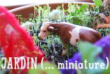 Activités au jardin