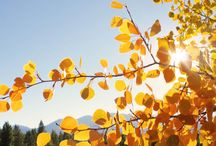 Seasons of Leadville -- Fall / Beautiful views--on and off campus--of Leadville in Autumn / by CMC_Leadville