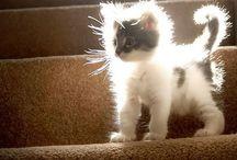JuJu the House Cat Pins Too!