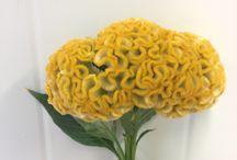 Blomsterliste snitt