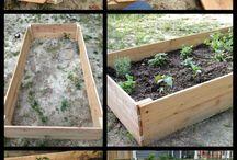 Garden - Tips & DIY