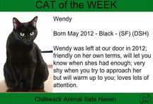 Cat of the Week 2017 / Jan. 1-7, 2017