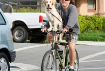 """Dogs and bikes / Since our own RubyTuesday (black lab) has joined the """"artist on a bike"""" team, I've been fascinated by how people have enjoyed carrying them by bike..."""