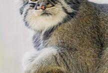pinter cat