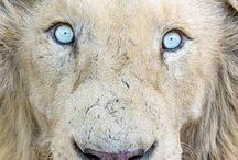 AnimalS - LeoS