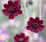 flores-çiçek / foto