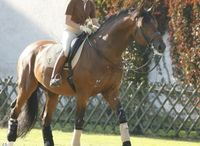 famous stallions