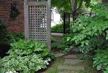 Garden / by Tea Visser-Kaldeway