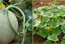 plantas cultivos y jardin