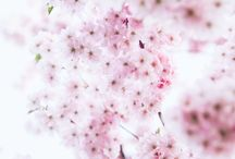 So many PRETTY things / All the pretty things in one spot / by theBERRY