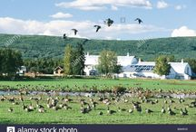 Wildlife and Birds at Creamer's Field / What can you see at Creamer's Field and in the Boreal Forest of interior Alaska? Well, Besides the Migrating Sandhill Cranes, that is??