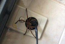 spider <3