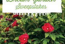 My Dream Garden / Sweet dreams of my dream garden!