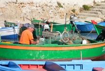 SEA LIFE FROM PUGLIA / MY ORIGIN ...