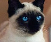 Pet Favorites / pet pics / by Debbie Laney