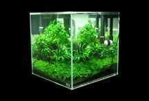Office Moss Scape / Zen in office Spazio zen per ufficio, mini paesaggio con muschio vivo