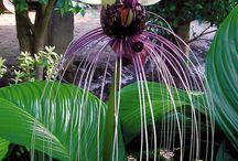 plantes étranges