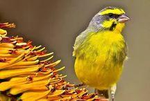b vor bird