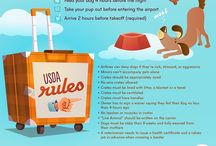 Doggy care + travel