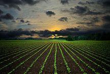 Agricultures du monde