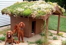 How To Bulid Dog House In Your Garden