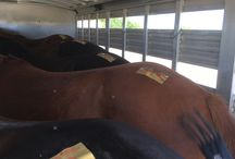 Easy Horse Transport